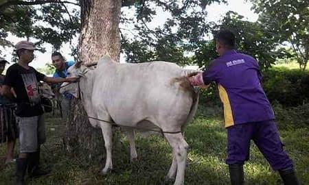 Foto idul adha